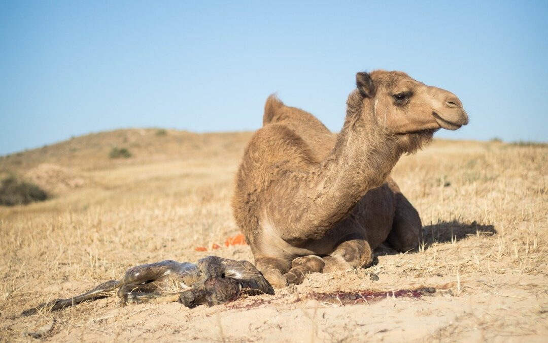 Have you found the Straw that broke the Camel's back on Hump Day?