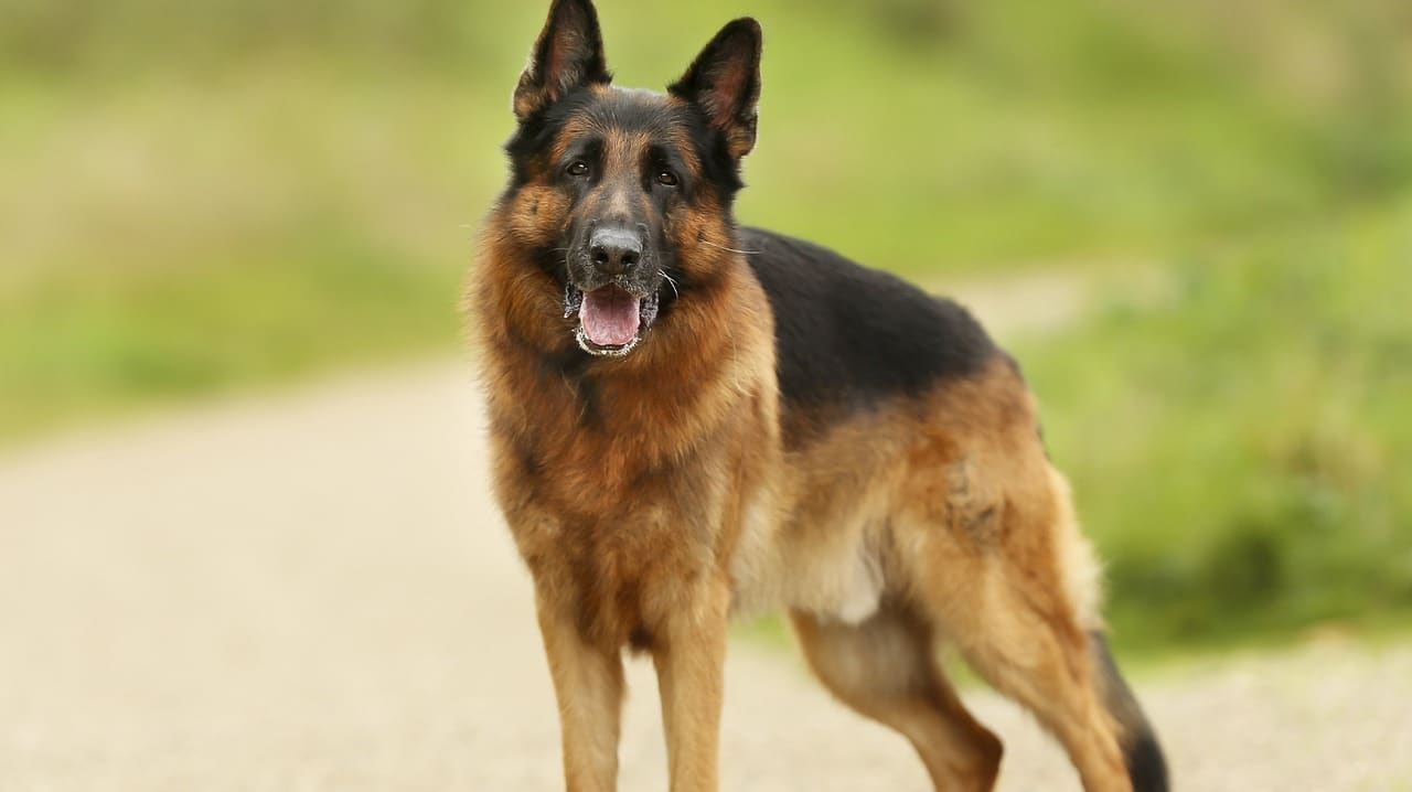 Polygraph examiner in Bradford, lie detector test, dangerous dog