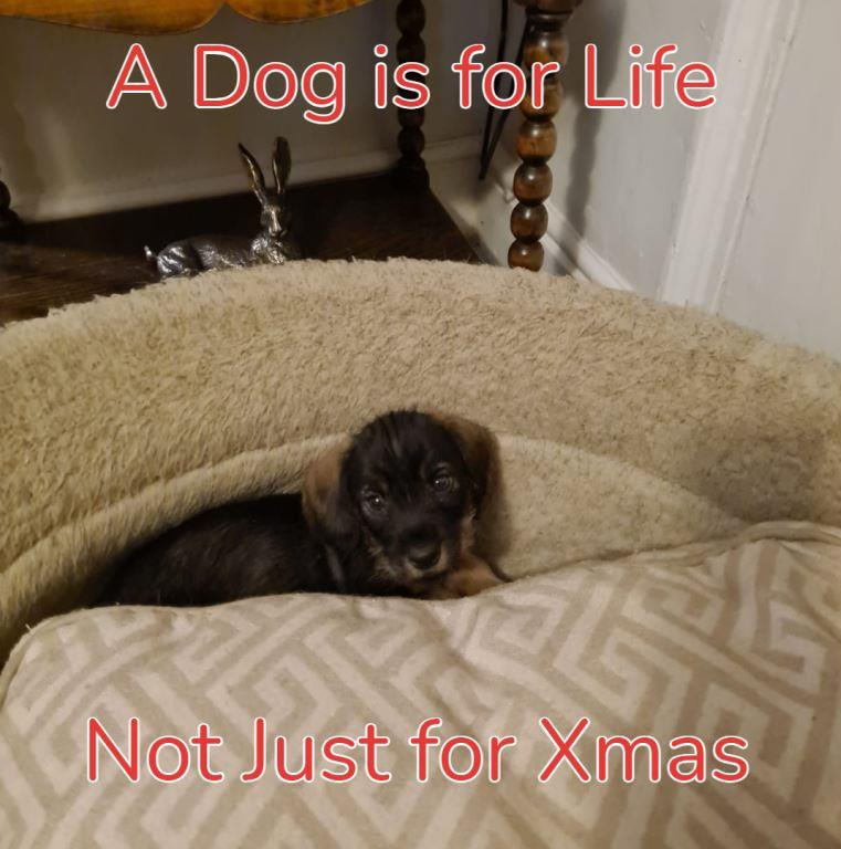A dog is for life not just for Christmas, a dog is for life, Alfie, Lie detector test UK
